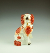 Red and White Staffordshire Spaniel